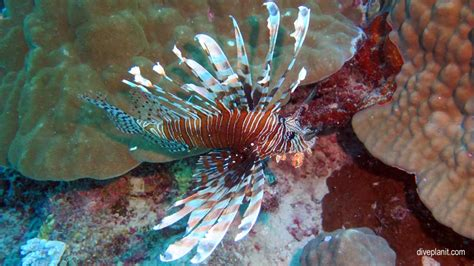 Lionfish slots jpg 1024x576